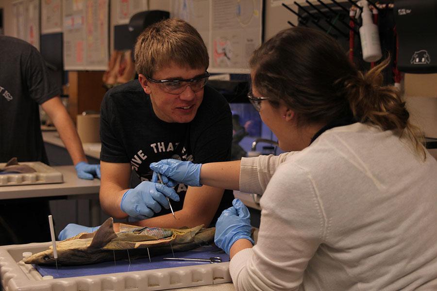 Senior+Brooks+Danahy+examines+a+shark+during+Zoology+on+Wednesday%2C+Jan.+15.+