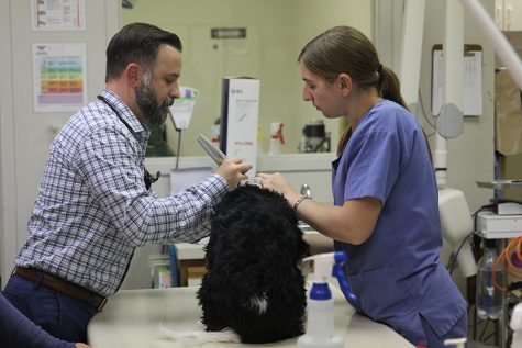Mill Creek Animal Hospital provides award-winning veterinary care
