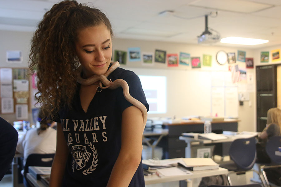 While completing stations on Friday, Sept. 7, senior Riley Lewis holds a snake, one of the many animals in science teacher Julie Roberts' room.