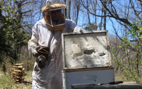 Bees play a significant role in our agriculture and environment