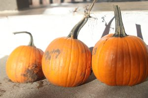 Pumpkins are one of the best parts about Halloween.