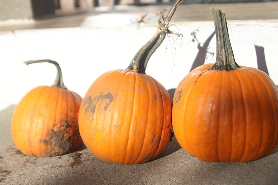 Pumpkins+are+one+of+the+best+parts+about+Halloween.