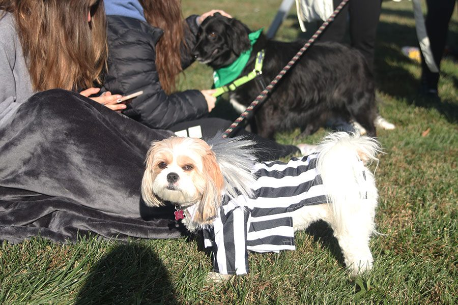Relay for Life committee hosts second annual Bark for Life