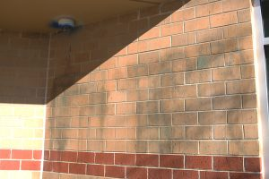 Vandals spray-paint graffiti outside school and break window