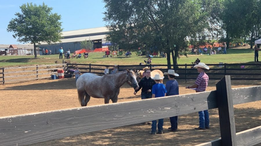 Sophomore Anna Rains presents her horse, Smokey, to the judges at a horse show in August 2020.