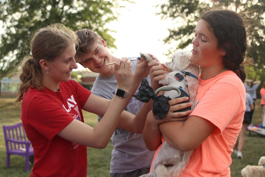 Paintbrush in hand, senior Ella Lorfing applies paint to a dog's paw while seniors Sydney Wootton and Bret Weber laugh.